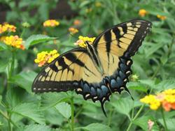 butterfly13-2