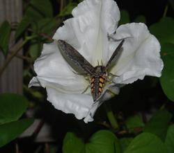 butterfly13-3