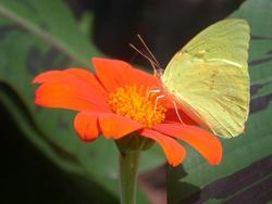 butterfly13-4