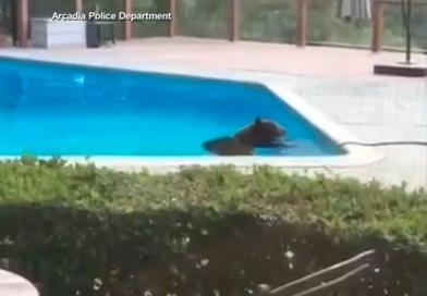 bearinpool