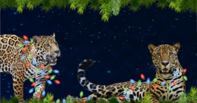 holidaylightsafari