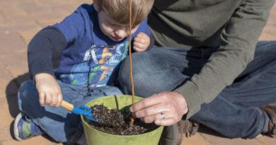 Free Seedlings For Arbor Day